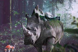 fotomontaje-collage-digital-rinoceronte
